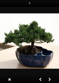 Ideas Bonsai Trees apk screenshot
