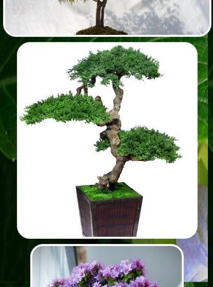 Indoor Bonsai Tree Design for Android - APK Download