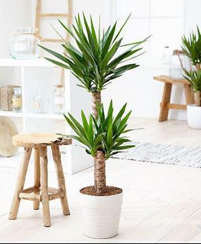Interior Plant ideas screenshot 1
