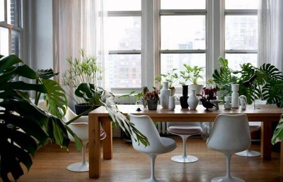 Interior Plant ideas screenshot 3