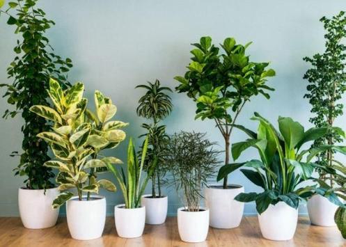 Interior Plant ideas screenshot 6