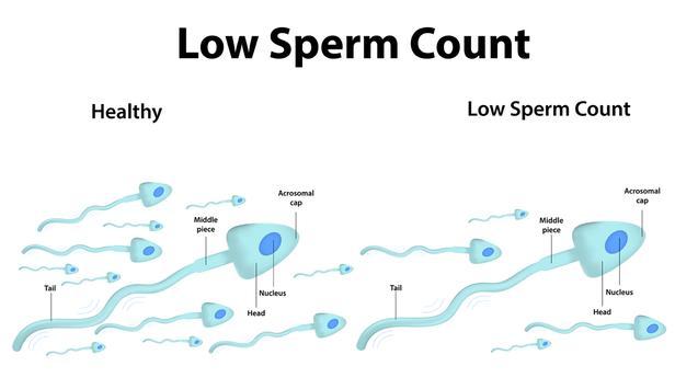 Accroître quantité de sperme Affiche