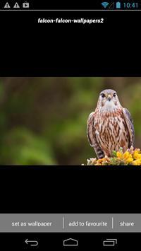 Falcon Wallpapers screenshot 2