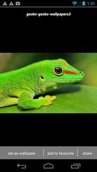 Gecko Lizard Wallpapers HD apk screenshot