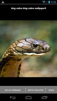 King Cobra Snake Wallpapers HD apk screenshot