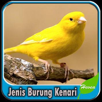 Jenis Burung Kenari apk screenshot