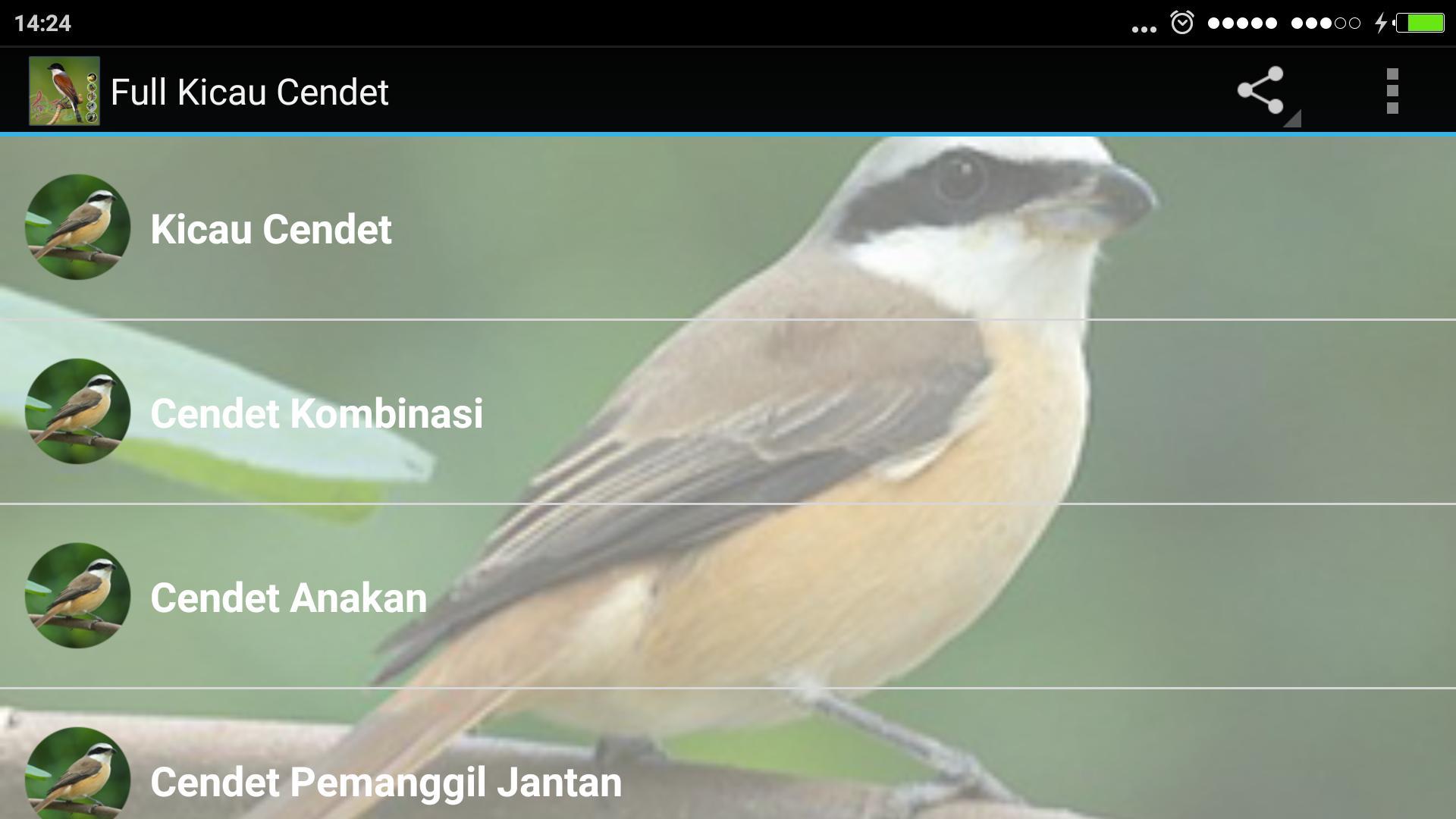 Full Kicau Burung Cendet For Android Apk Download