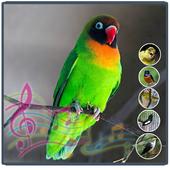 Terapi Kicau Burung Lovebird icon