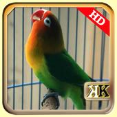 Ngekek Lovebird Paud Panjang icon