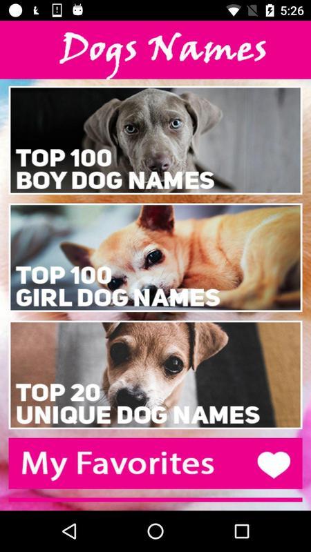 Imgenes De Girl Dog Names Top 20