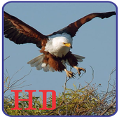 Wallpapers Eagle Image HD icon