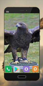 Wallpapers Eagle Image HD screenshot 2