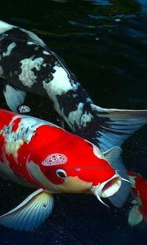 Koi Fish Live Wallpaper apk screenshot