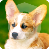 Cute Little Welsh Corgi Puppy Dog Lock Screen icon