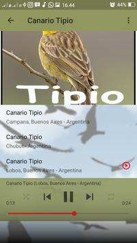 Canto do Canario Tipio screenshot 5