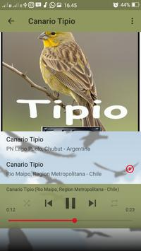 Canto do Canario Tipio screenshot 6