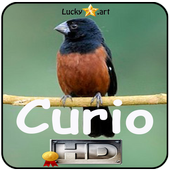 Canto de Curio Classico icon