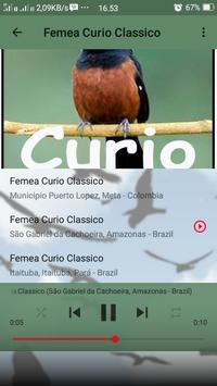 Canto de Curio Classico screenshot 7