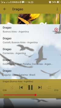 Canto de Dragao screenshot 2