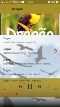 Canto de Dragao screenshot 3