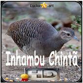 Canto de Inhambu Chinta icon