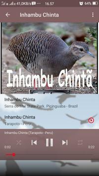 Canto de Inhambu Chinta apk screenshot