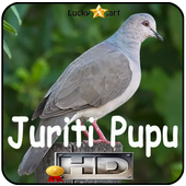 Canto de Juriti Pupu icon