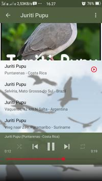 Canto de Juriti Pupu screenshot 6
