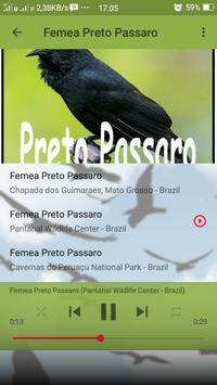 Canto de Preto Passaro screenshot 7
