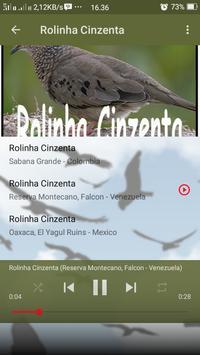 Canto de Rolinha Cinzenta screenshot 4
