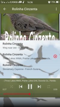 Canto de Rolinha Cinzenta screenshot 3