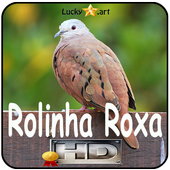 Canto de Rolinha Roxa icon