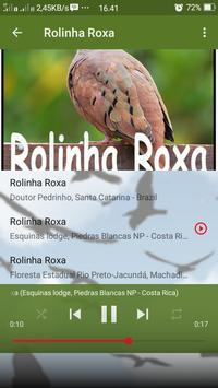 Canto de Rolinha Roxa apk screenshot