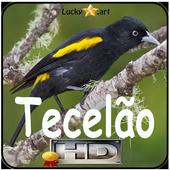 Canto de Tecelao icon