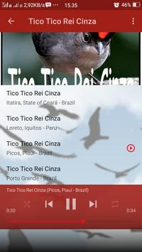 Canto de Tico Tico Rei Cinza screenshot 4