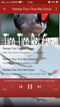 Canto de Tico Tico Rei Cinza screenshot 7