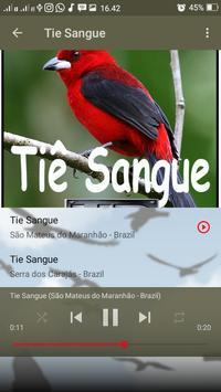 Canto de Tie Sangue screenshot 6