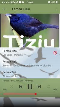 Canto do Tiziu screenshot 7