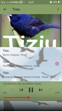 Canto do Tiziu screenshot 5
