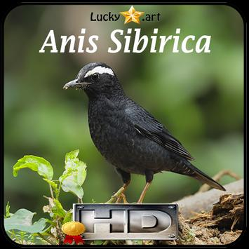 Anis Sibirica Top poster