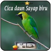 Cica daun Sayap biru Top icon