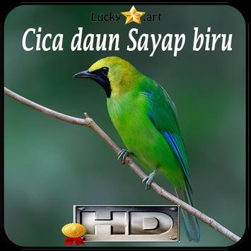 Cica daun Sayap biru Top apk screenshot