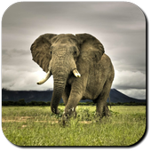 Elephant Wallpapers icon