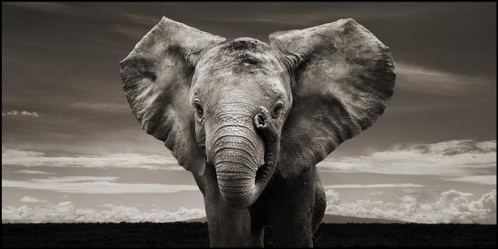 Elephant Wallpapers screenshot 5