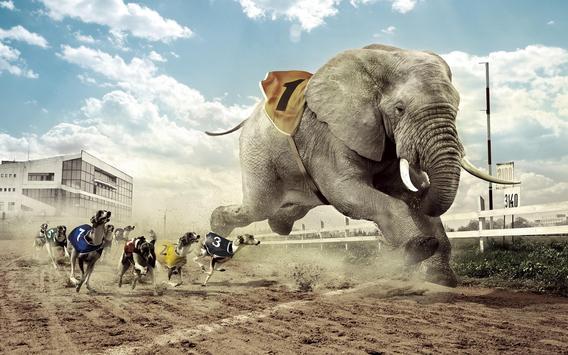 Elephant Wallpapers screenshot 2