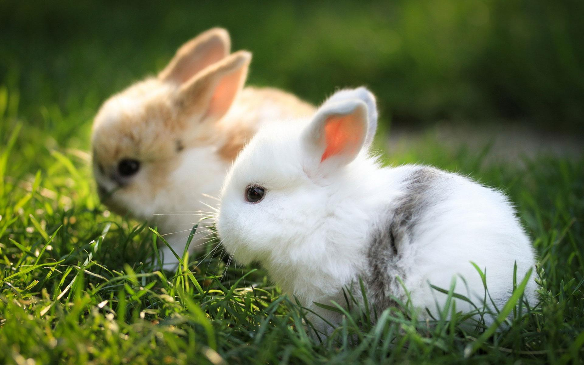 Rabbit Wallpapers For Android Apk Download