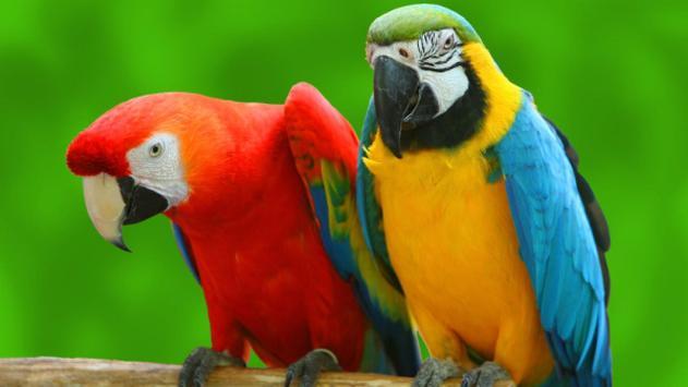 Parrot Bird Live Wallpaper poster