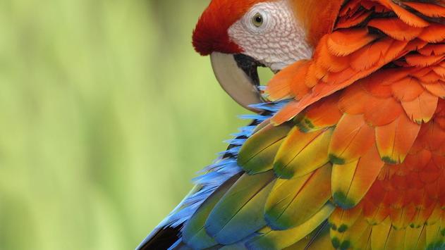 Parrot Bird Live Wallpaper apk screenshot