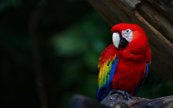 Parrot Bird Live Wallpaper screenshot 2