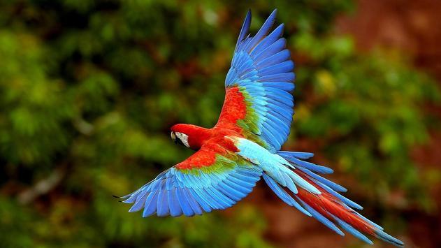 Parrot Bird Live Wallpaper screenshot 3